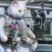 The Star - Bohemian Cats