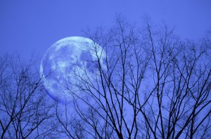 Amethyst Tiger - Blue Moon