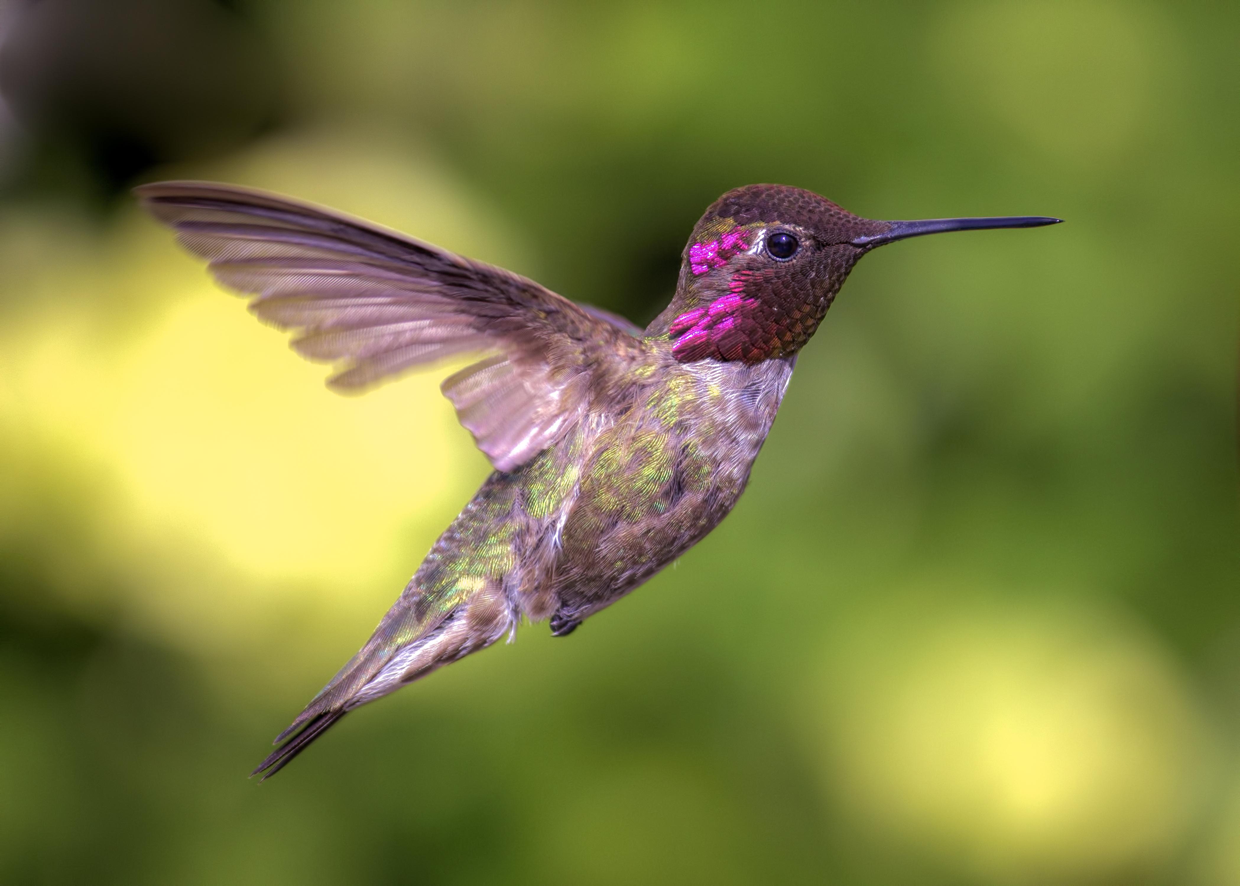 Hummingbird | Amethyst Tiger